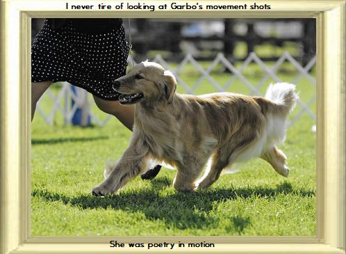 websiteGarbo movement