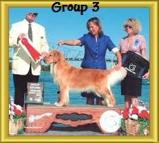 websitegroup3