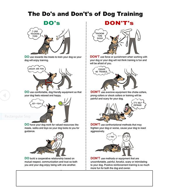 dog training dos donts