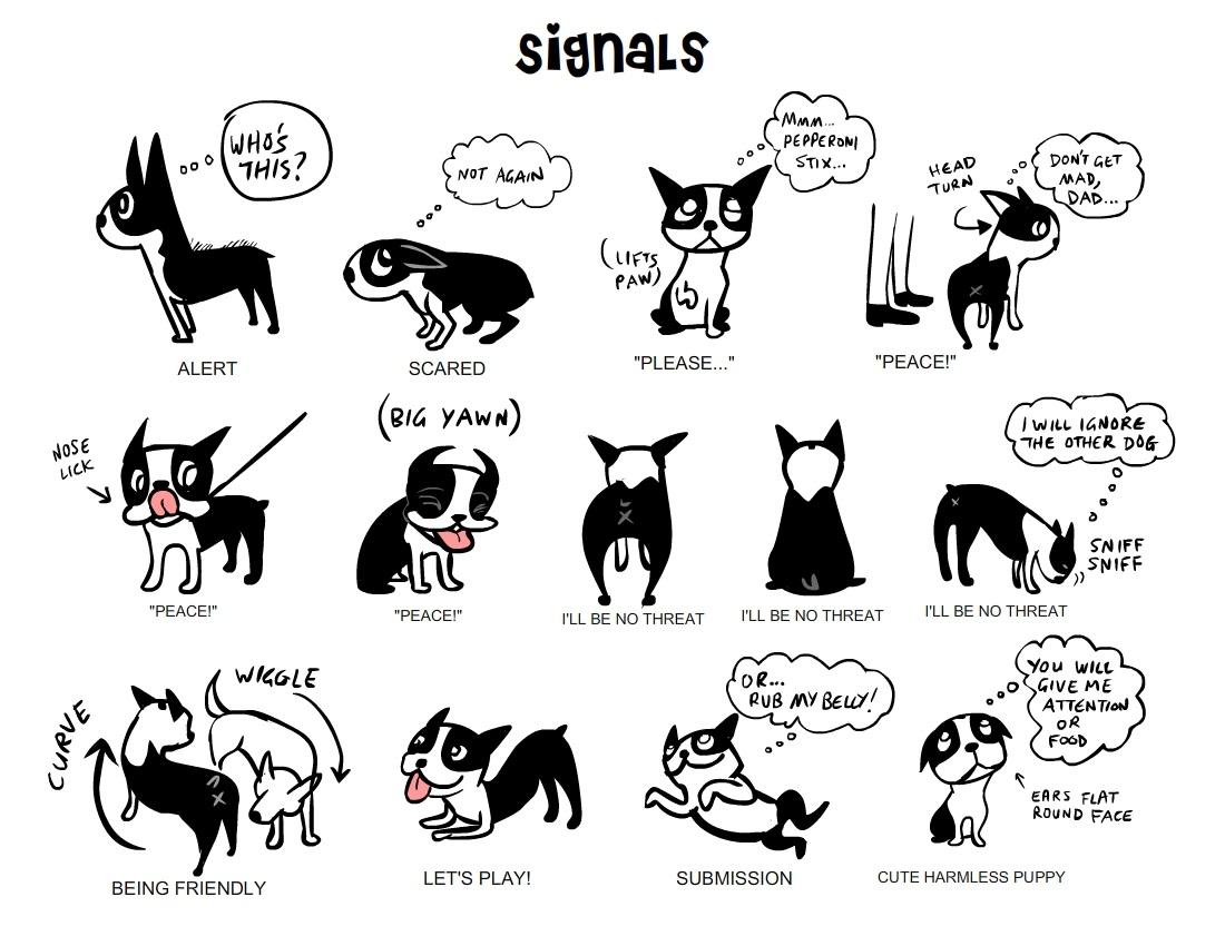 dog signals