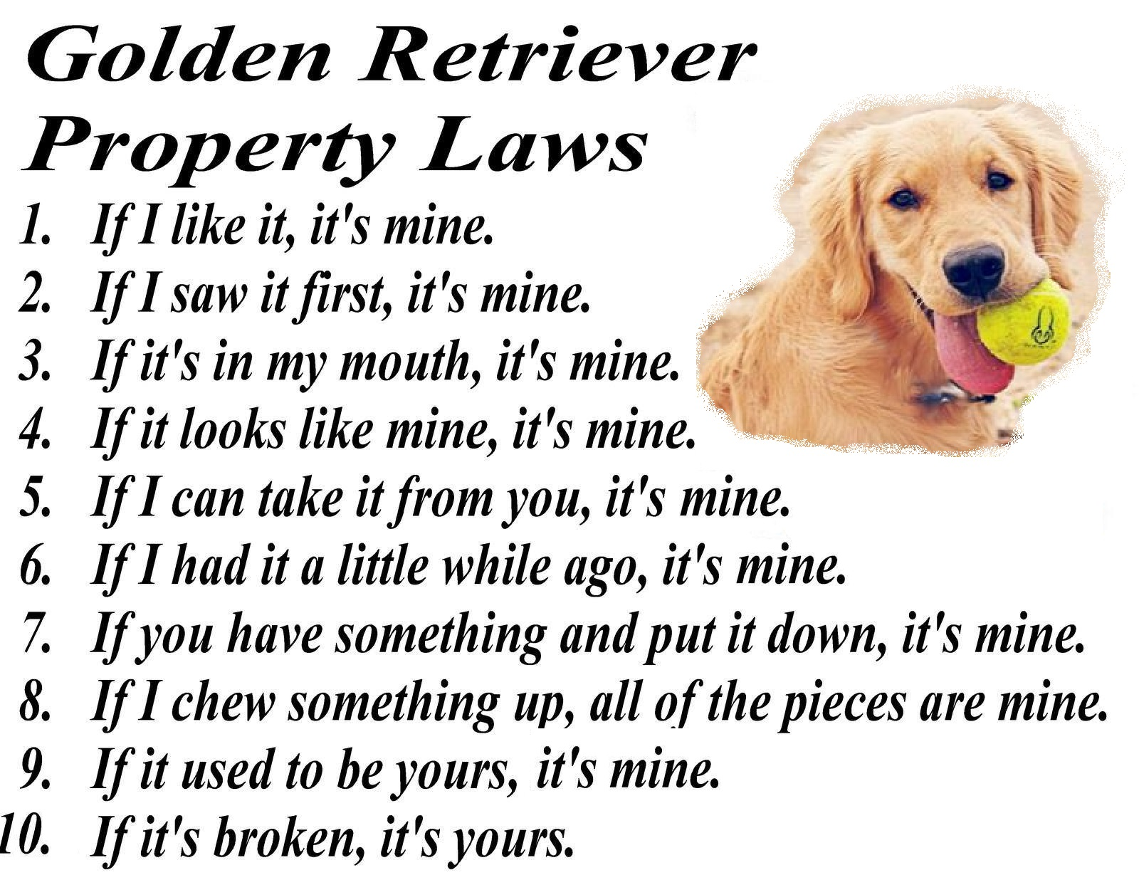 golden retriever property law