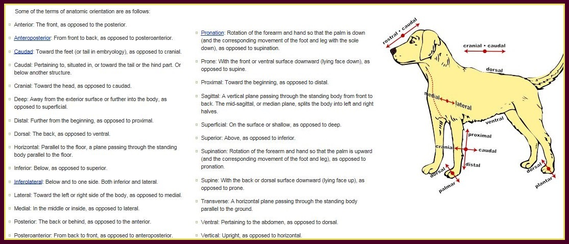 medical terms2