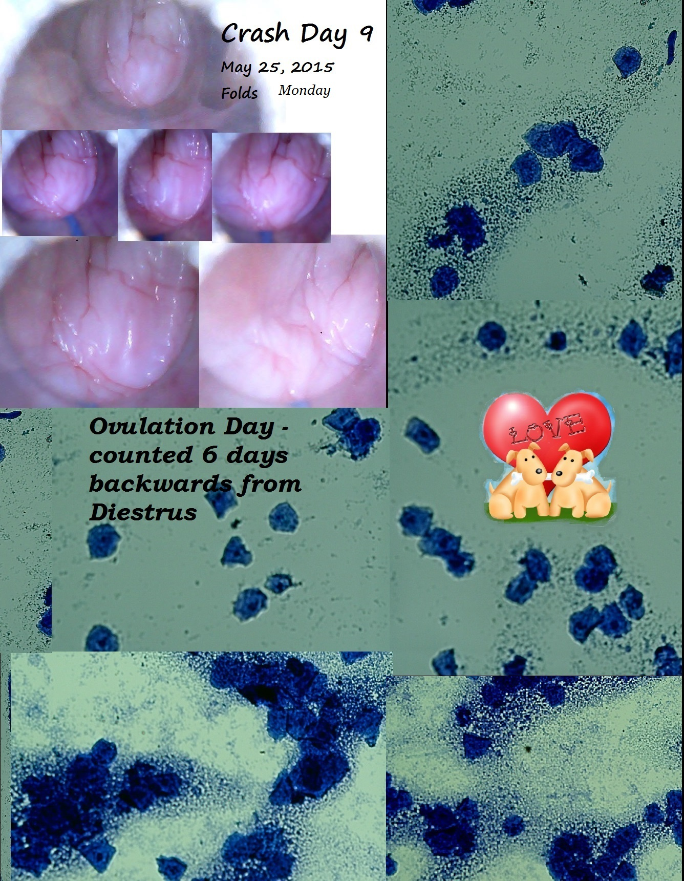 Crash May 25 2015 folds and cytology  day 9